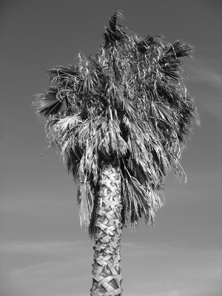 California 3 112